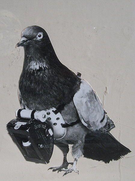 Kamera mini dipasang di bagian dada burung Merpati (publicdomainreview.org)