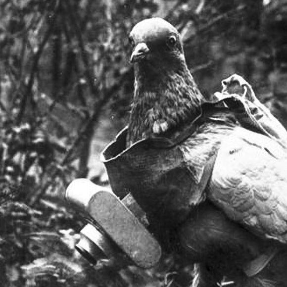 Kamera terlihat berat saat dibawa burung Merpati (publicdomainreview.org)