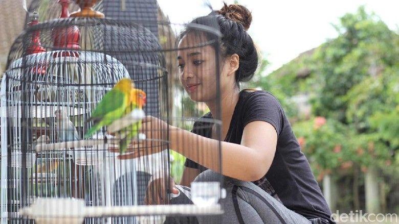 Kartika Jezvina juri lomba burung cantik (detik.com)