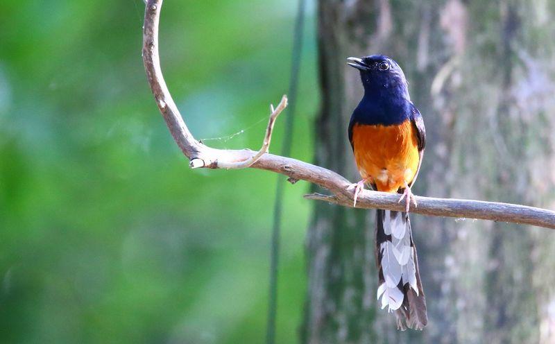 Suara Burung Masteran untuk Memaster Murai Batu (shells.tw)