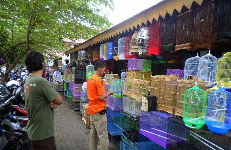 Tips Ganti Sangkar Burung Baru (sangkarburungskb.blogspot.co.id)