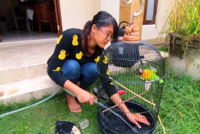 Cara Membersihkan Sangkar Burung yang Bau dan Kotor (youtube.com)