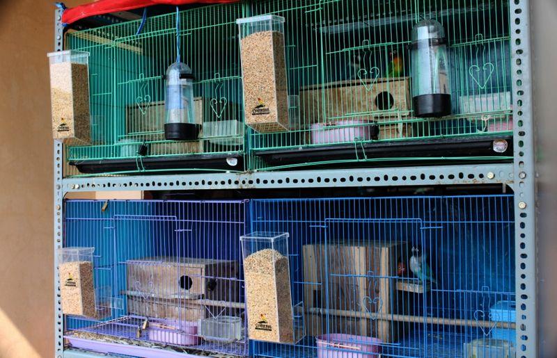 20 Tips Merawat Burung Saat Ditinggal Mudik Lebaran