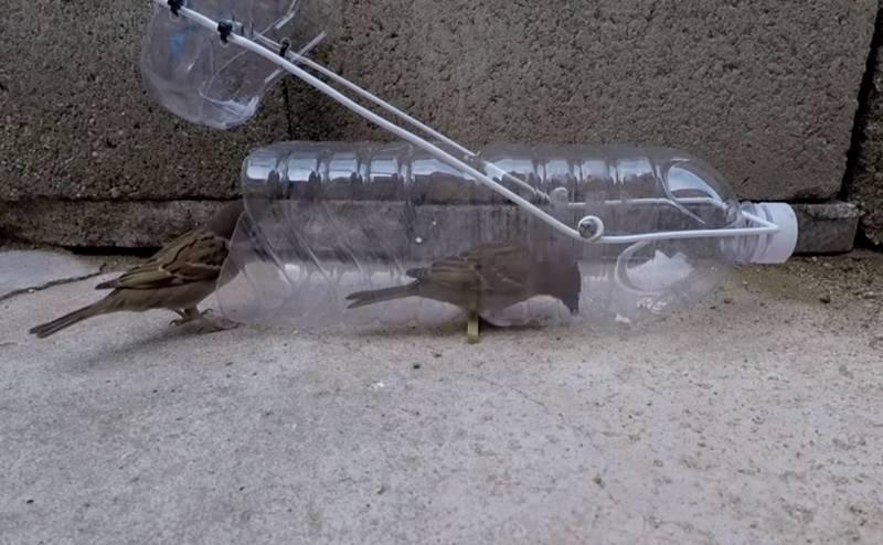 Cara Menangkap Burung (youtube.com)