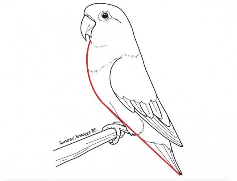 Penilaian Bagian Dada Lovebird Beauty Contest (agromedia.net)