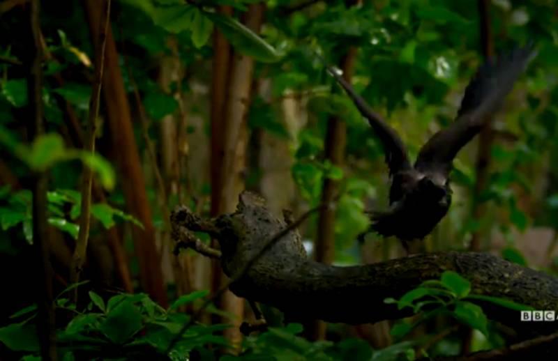 Pohon Pembunuh Ribuan Burung (washingtonpost.com)