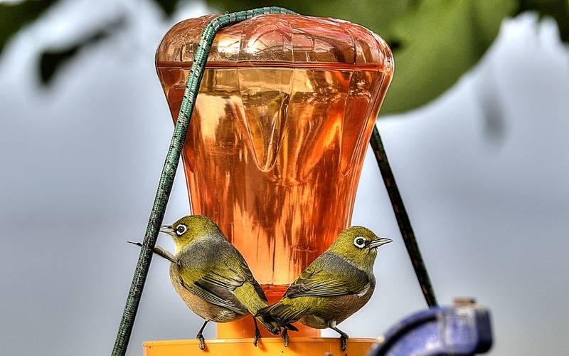 Racikan Minuman Pleci (juliescamera.com)