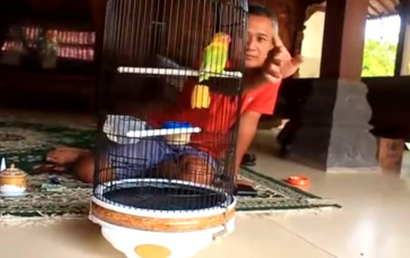 18 Perawatan Harian Lovebird Kusumo Agar Ngekek Panjang di Lomba
