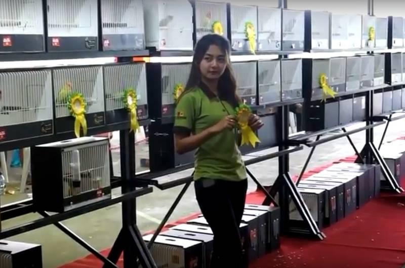 9 Standar Penilaian Lovebird Beauty Contest di Indonesia