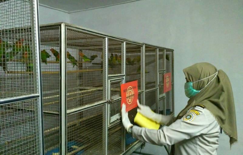 BKSDA dan burung Lovebird (teropongkarawang.com)