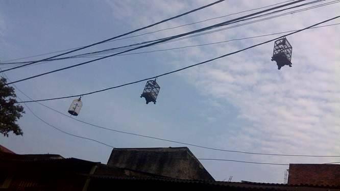 Bahaya menggantang Pleci di kabel listrik (omkicau.com)