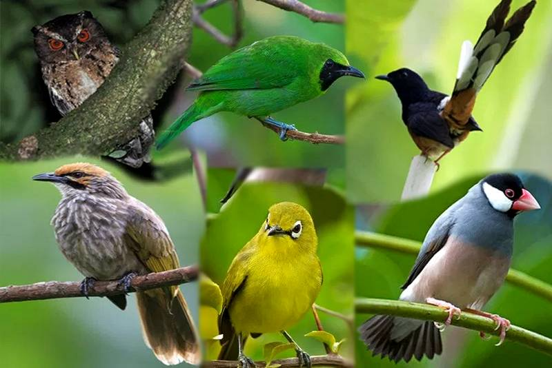 Daftar Burung Dilindungi Terbaru (bbksdajatim.org)