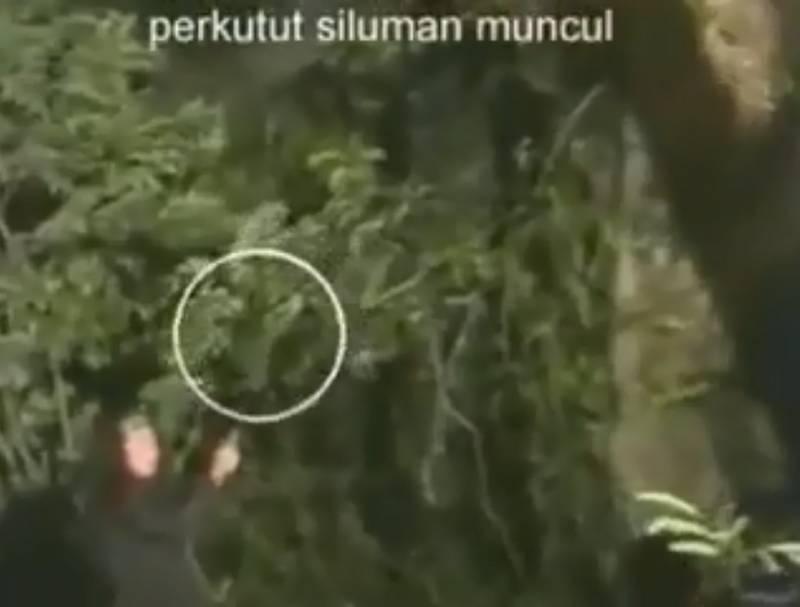 Muncul Perkutut Siluman di hutan (youtube.com)