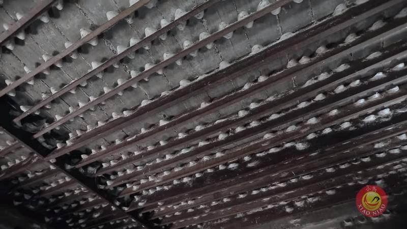 Sarang Burung Walet Berkualitas (youtube.com)
