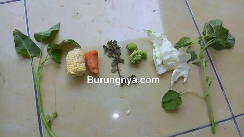 Bahan Sayur Rica-rica untuk Lovebird (facebook.com-Rudy Hartono)