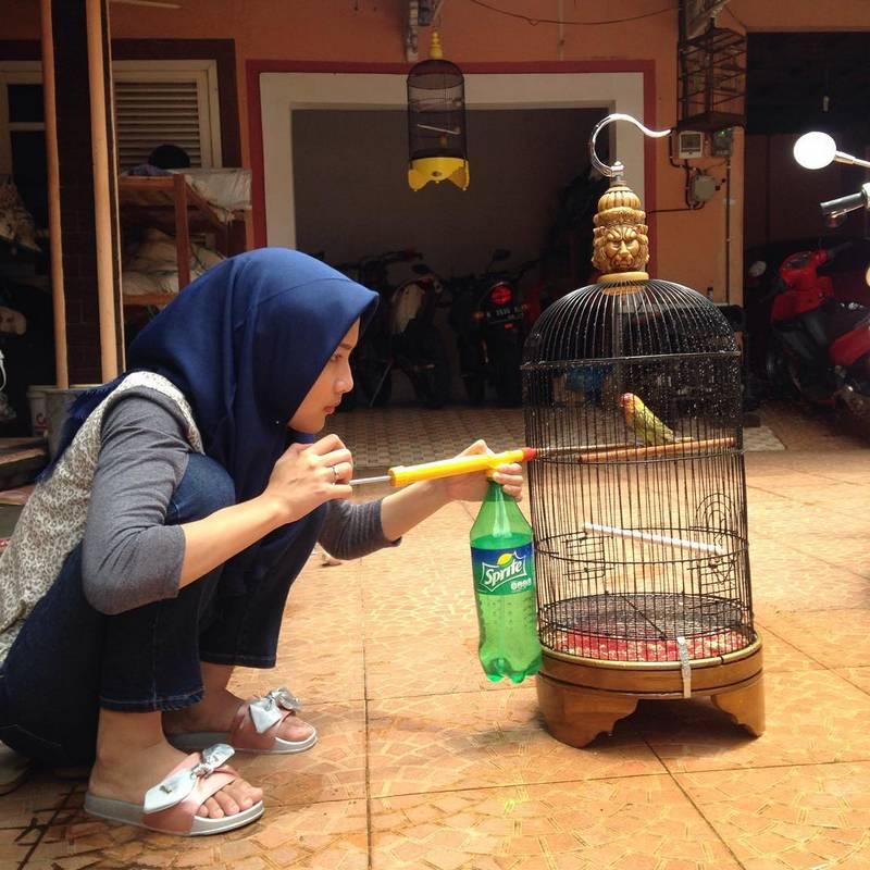 Terapi Lovebird Mandi Kering Mandi Kering (instagram.com-@ryansempol)