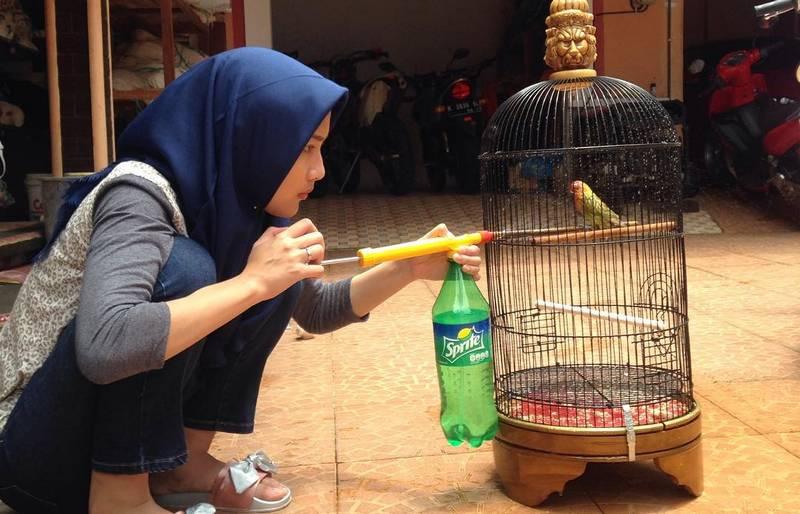 Terapi Mandi Lovebird biar gacor (instagram.com-@ryansempol)