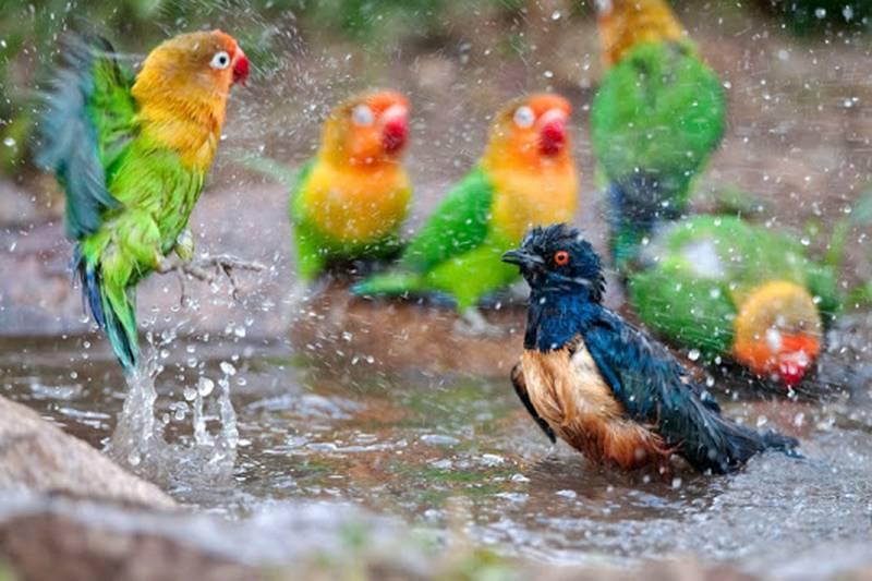 Cara merawat burung di musim dingin (plus.google.com)