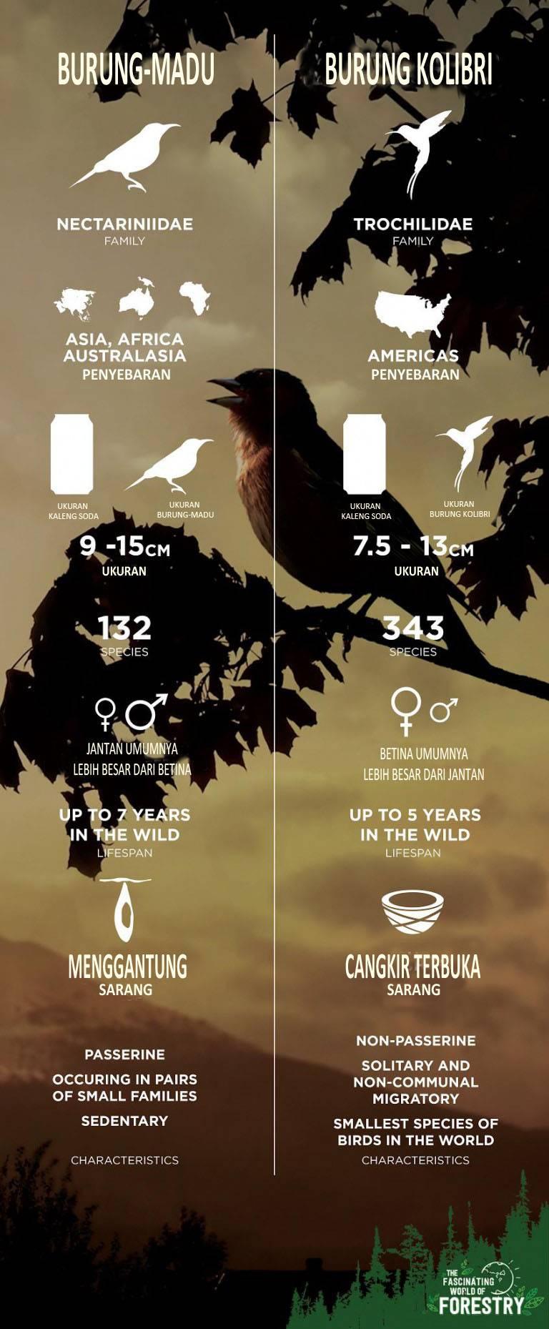 Gambar infografik perbedaan burung Kolibri dan burung Madu (trubus.id)