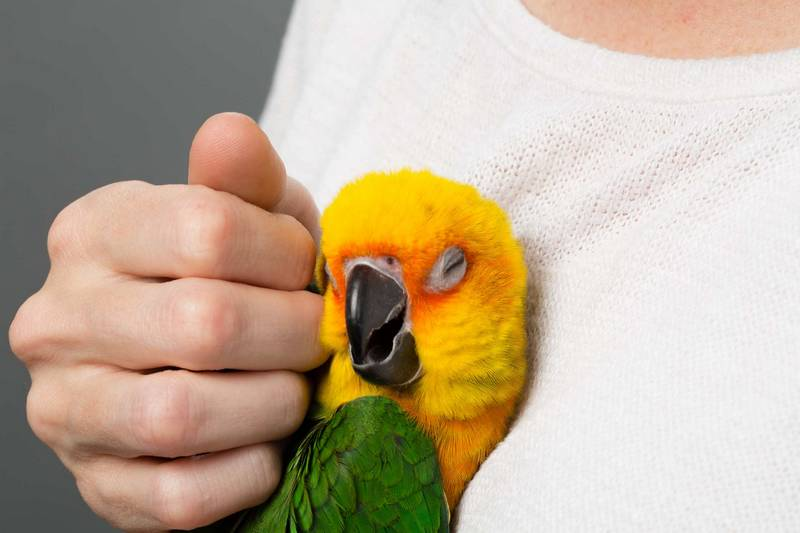 Perawatan Burung di Musim Dingin (thesprucepets.com)