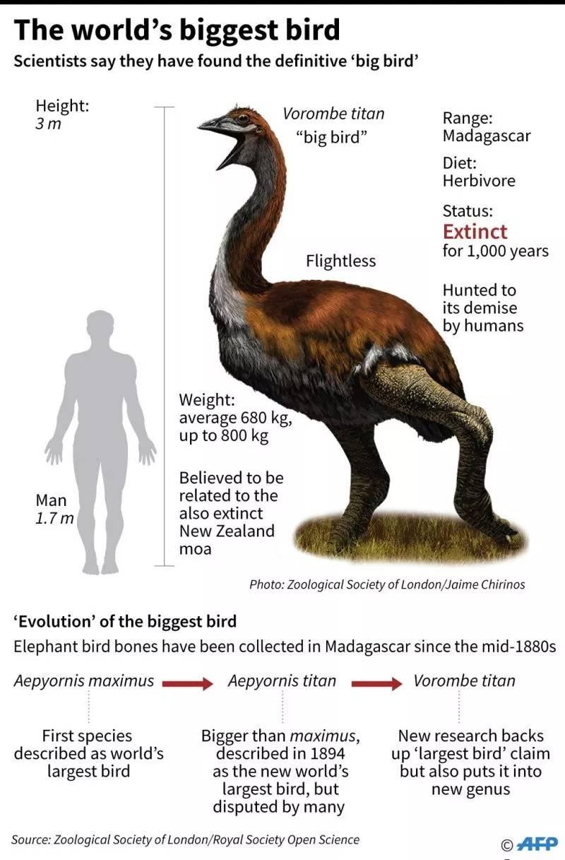 Burung Terbesar di Dunia (centradailytimes.org)