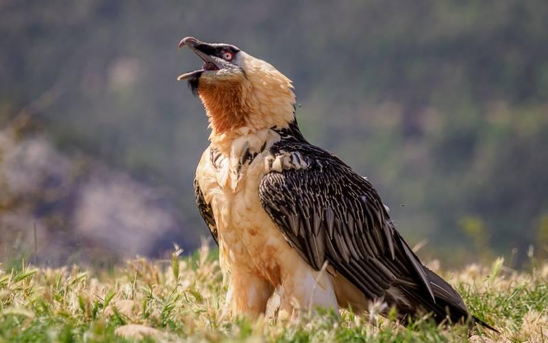 Jenis Burung Berbahaya bagi Manusia (hiveminer.com)