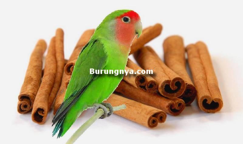 Manfaat Kayu Manis untuk Lovebird (rudrasakti.com)