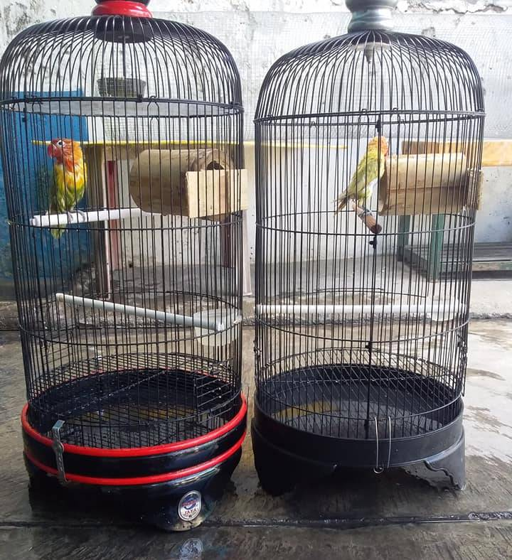 Terapi Lovebird dengan Glodok Bambu (facebook.com-KokoRiko)