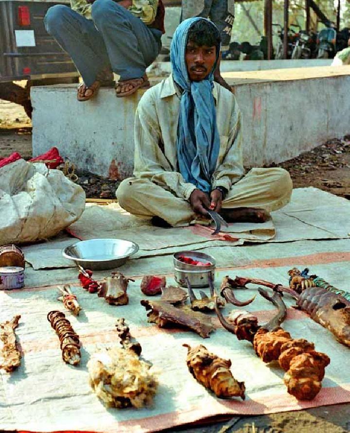 Bagian Tubuh Burung Hantu Dijual untuk Praktik Ilmu Sihi di India (Abrar Ahmed WWF India)