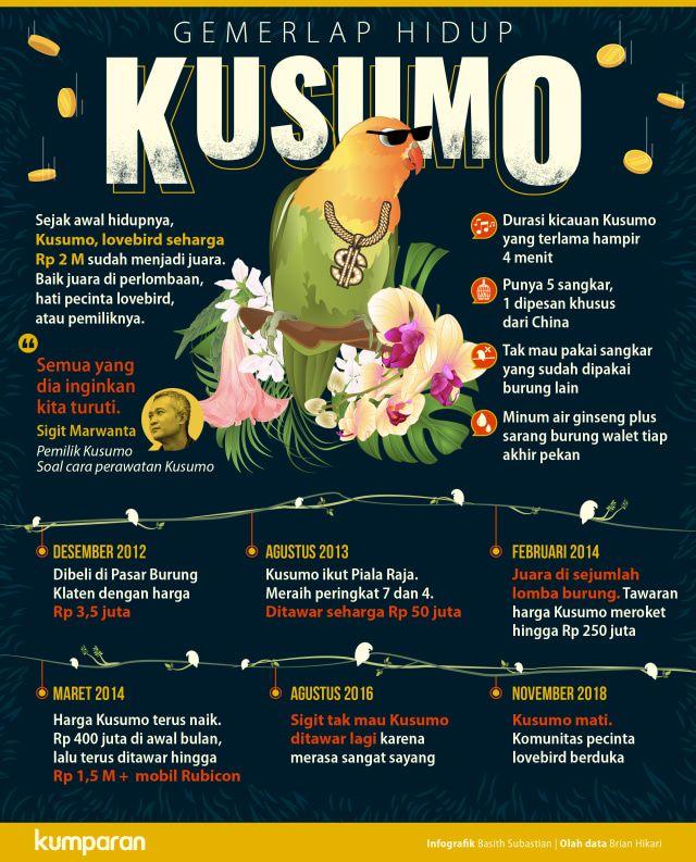 Fakta Menarik Lovebird Kusumo (kumparan.com)