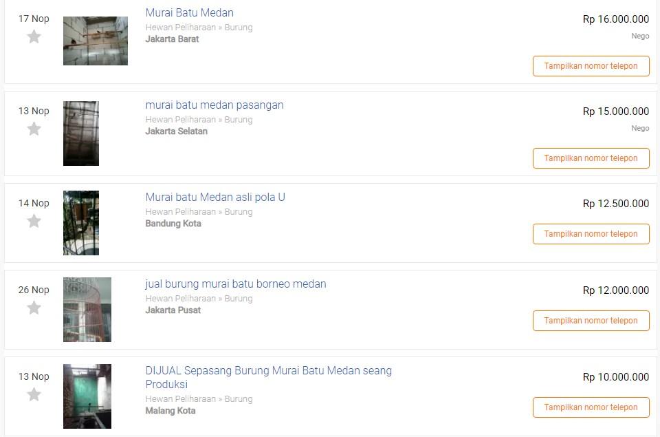 Harga Murai Batu Medan Termahal (olx.co.id)