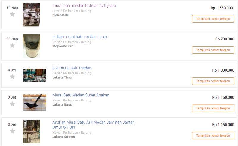 Harga Murai Batu Medan Termurah (olx.co.id)
