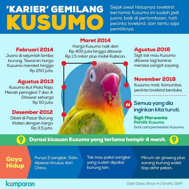 Perjalanan Hidup Lovebird Kusumo (kumparan.com)