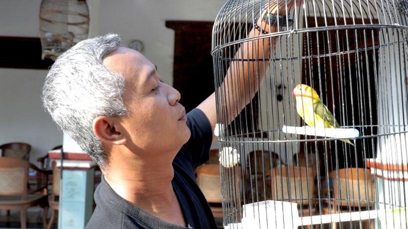 Salah satu Lovebird Peliharaan Sigit WMP (kumparan.com)