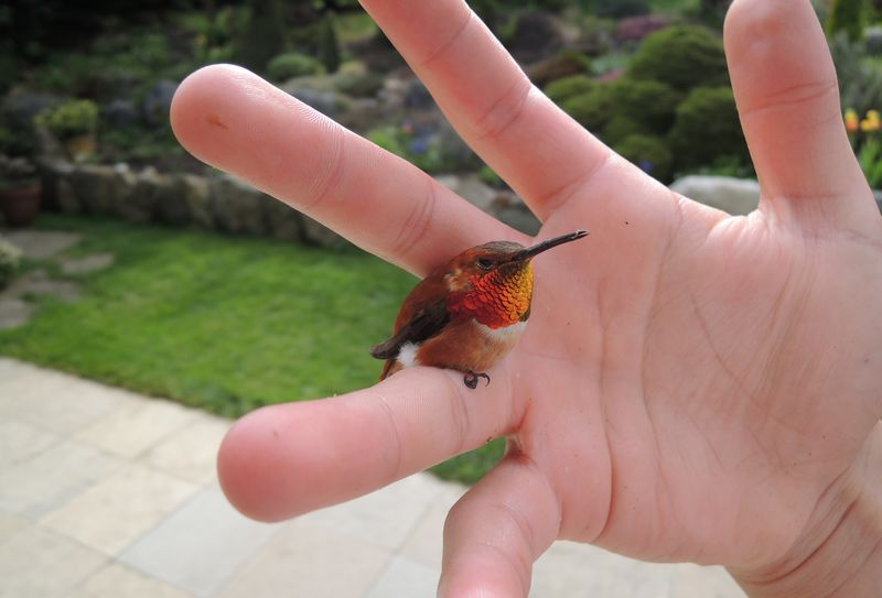 15 Jenis Burung Terkecil di Dunia Lengkap dengan Gambarnya