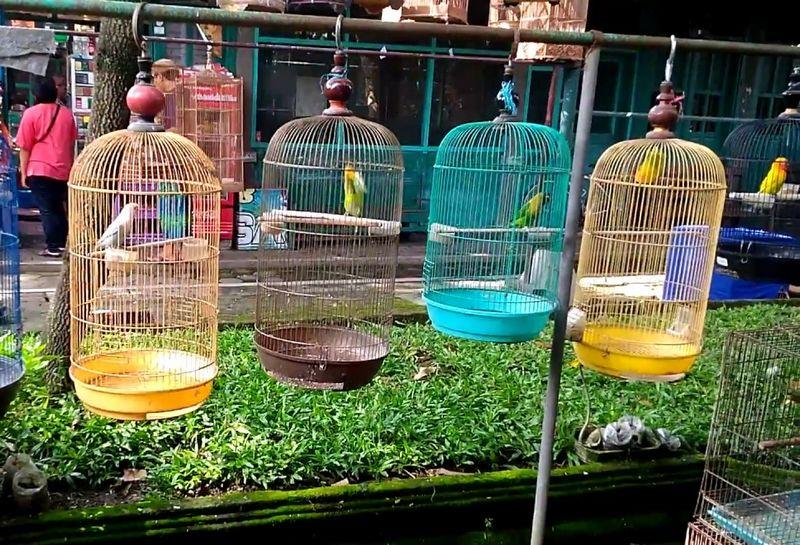 Harga Lovebird di Pasar Burung (youtube.com)