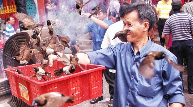 Tahun Baru Imlek, Warga Melepas Burung Pipit Untuk Buang Sial