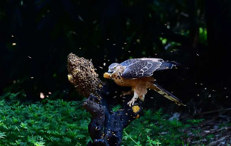 Burung Makan Madu (mnn.com)