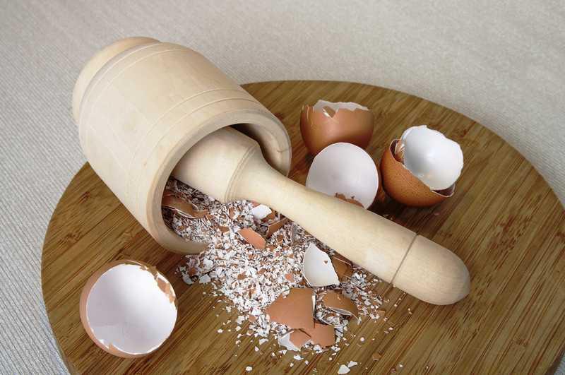 Cangkang Telur untuk Pakan Burung (babe.news)