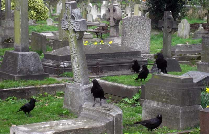 8 Jenis Burung yang Penuh Mitos, Sebagian Bikin Merinding