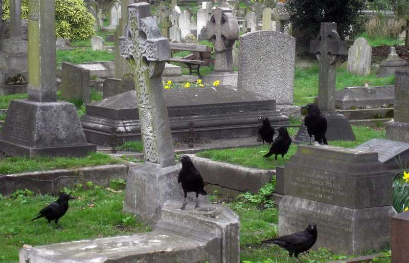 Jenis Burung Penuh Mitos Menakutkan (centerofthewest.org)