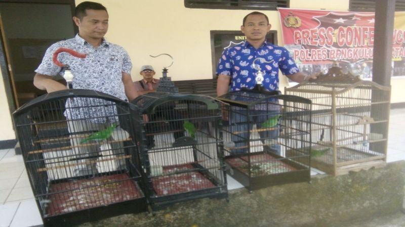 Jual Beli Burung Cucak Ijo Masuk Penjara (lintasbengkulu.com)