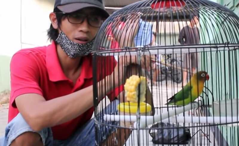 Lovebird Haruka Ngekek Panjang 6 Menit (youtube.com)