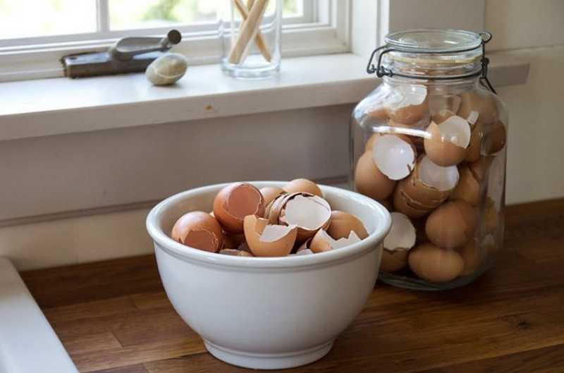 Manfaat Cangkang Telur (hipwee.com)