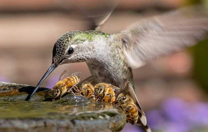 Manfaat Madu untuk Stamina Burung (reddit.com)