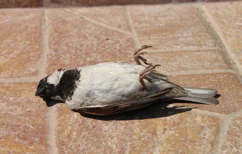 Penyebab Burung Mati Mendadak (entropymag.org)