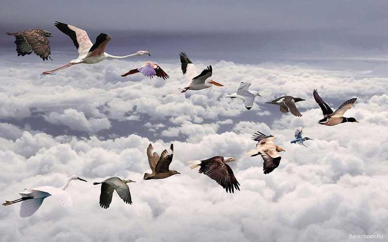 Rahasia Burung Terbang Tidak Tabrakan (pinterest.com)