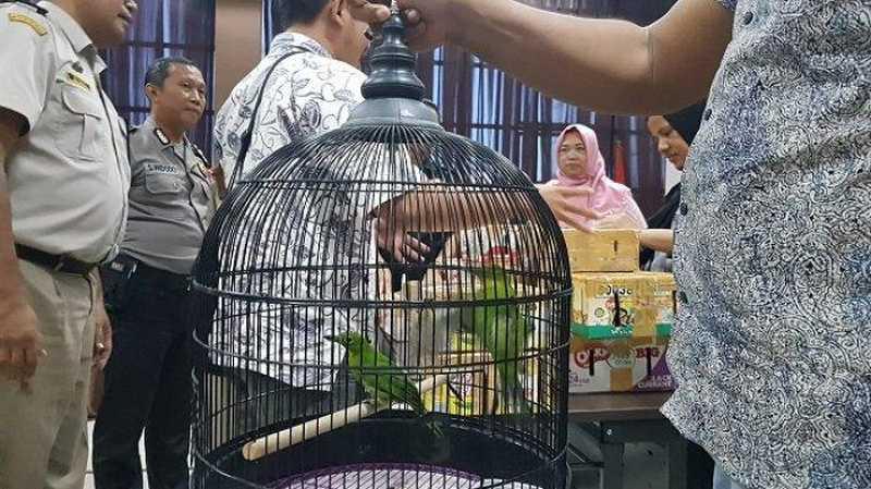 Syarat Memelihara Burung Dilindungi dari BKSDA (tribunnews.com)