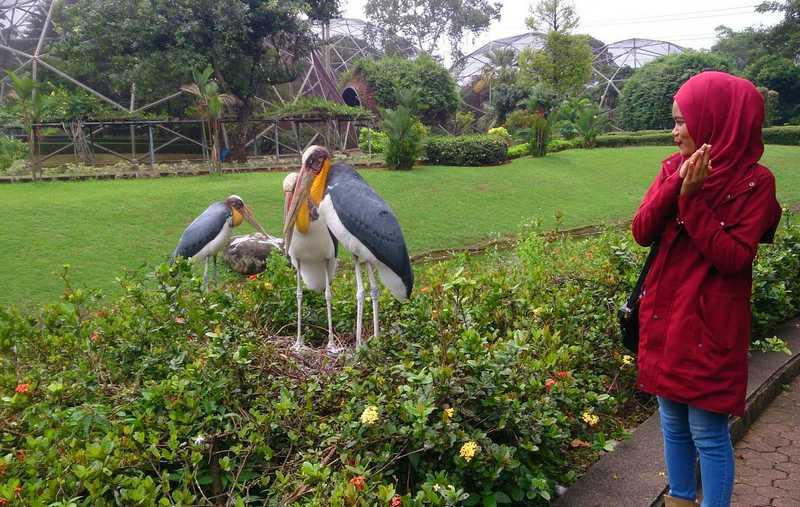 Taman Burung TMII (fenifah.blogspot.com)
