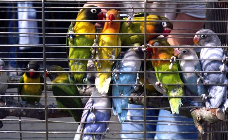 Daftar Harga Burung Lovebird Terbaru (artsharkspprsnowflakescookies.tumblr.com)
